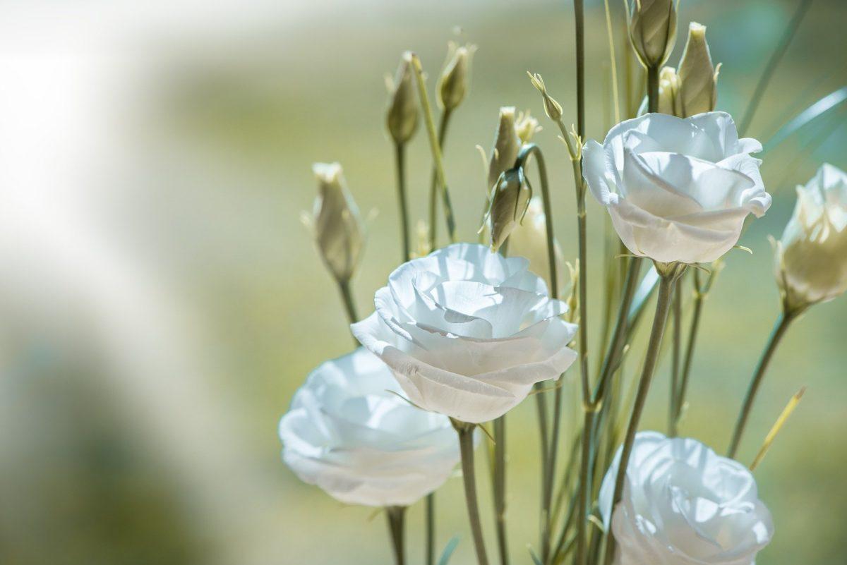 Concours de fleurissement «Fleurs de Guerlédan»